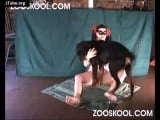 Zooskool petlust Timberwolf in Gothic dog