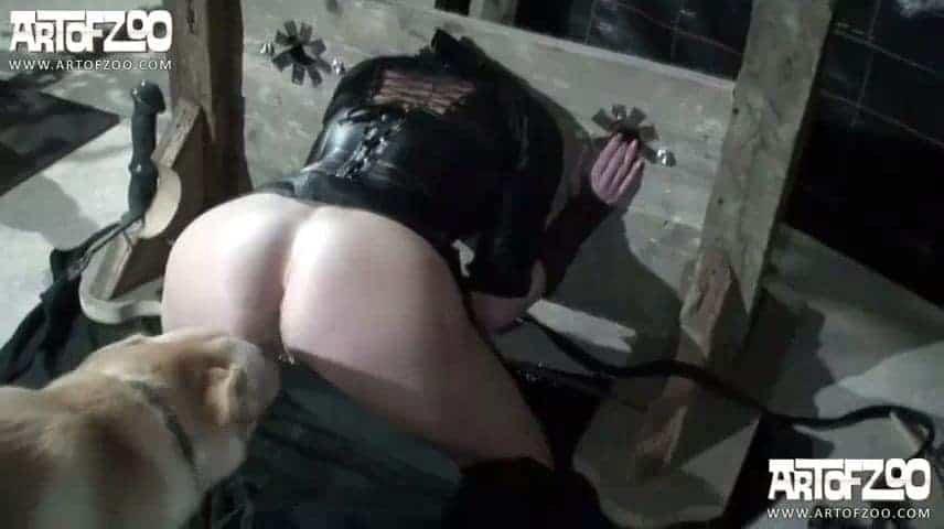 Artofzoo Vixen And Silvy In Dog Pleasure Slave Zootube | CLOUDY ...