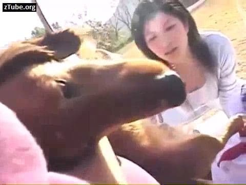 Japanese zoo girls suck penis of a dog - ZooTube
