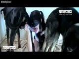 ArtOFZoo Vixen HD Bestiality (8)