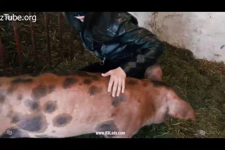 Porn boar Pig Sex
